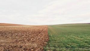 La coltivazione del fondo non è sufficiente per provare l'usucapione. (Corte di Cassazione, Sezione Civile n. 19580 del 09.07.2021).